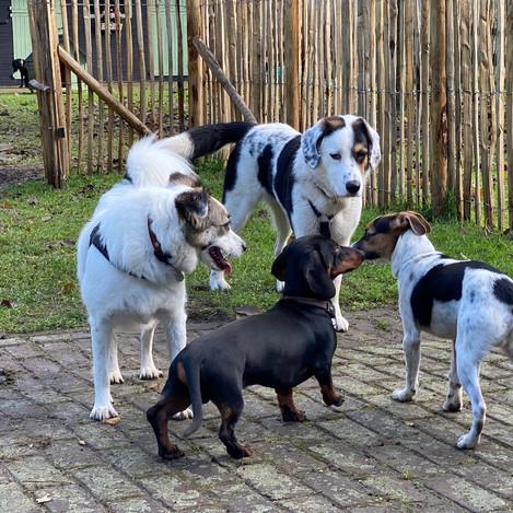 Dries, Kasiris, Greetje en Tito
