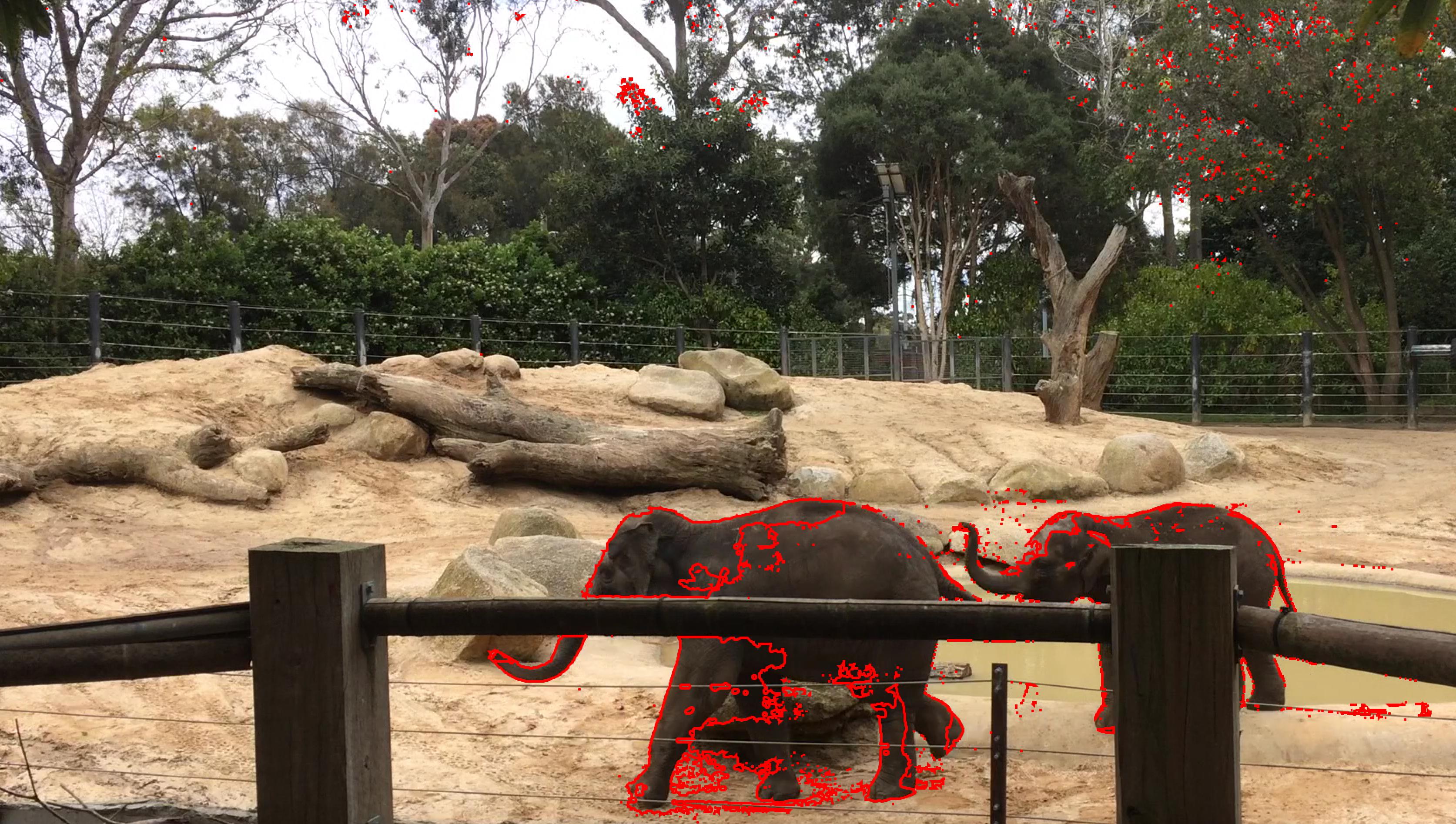 Elephant Vision Tracking