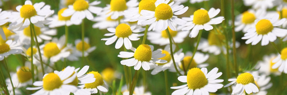 christinecasterouge - aromatherapie-pxhe