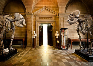"A hall with polished stone floors and walls. There is an open door with ""Anatomical Museum"" written over it, and with a bust on either side. Only bright light is visible through the door. Two very large animal skeletons are either side of the hall, closer to the camera than the door."