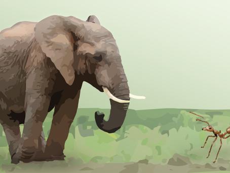 A formiga disse ao elefante. Mas, era boato!