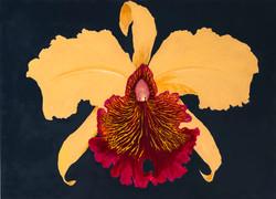 orquidea-1556558826