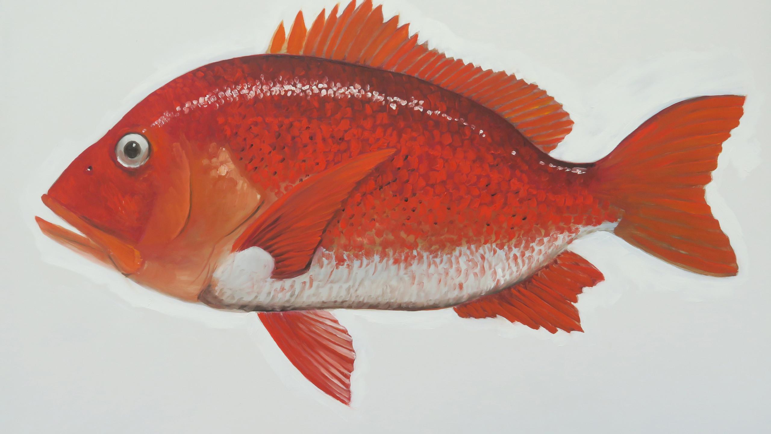 pargo-rojo-1556558924