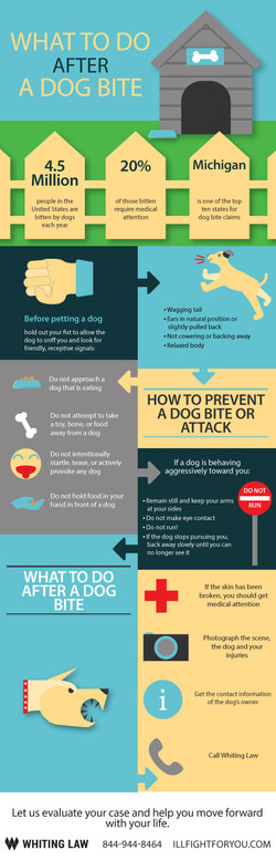 What-to-do-after-a-dog-bite