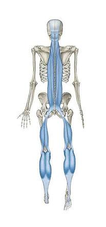 AnatomyTrainsImage_edited.jpg
