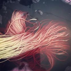 Quebracho dye pot