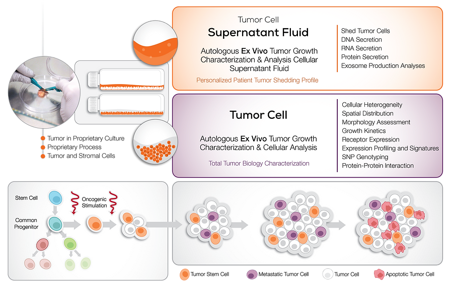Helomics Live Cancer Cell Testing