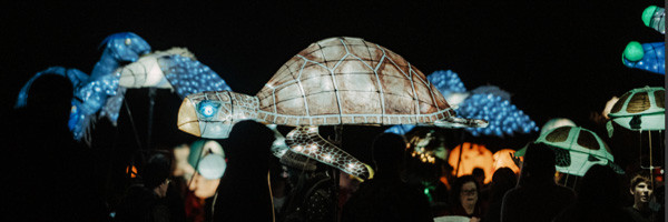turtle lanterns light up the sky