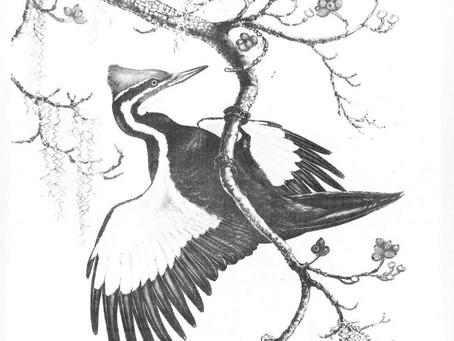 Flashback: 1968 Publication of The Islander