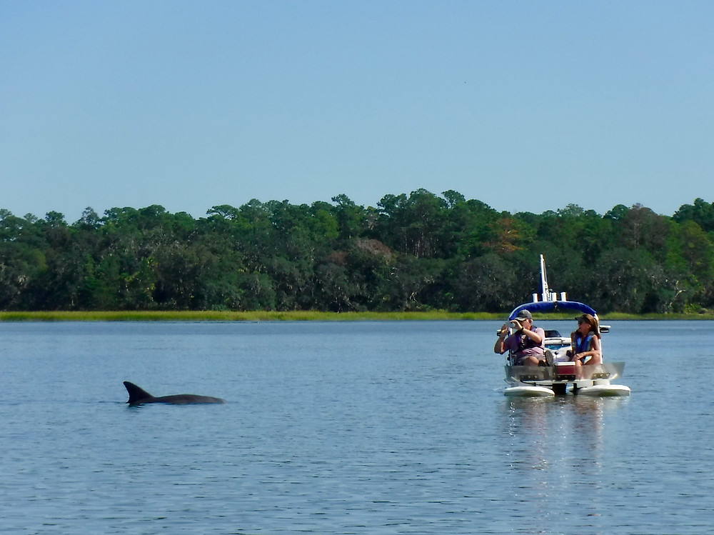 Dolphin Sighting on a Hilton Head Dolphin Tour