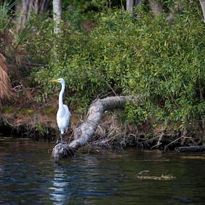 The Wildlife of Hilton Head Island