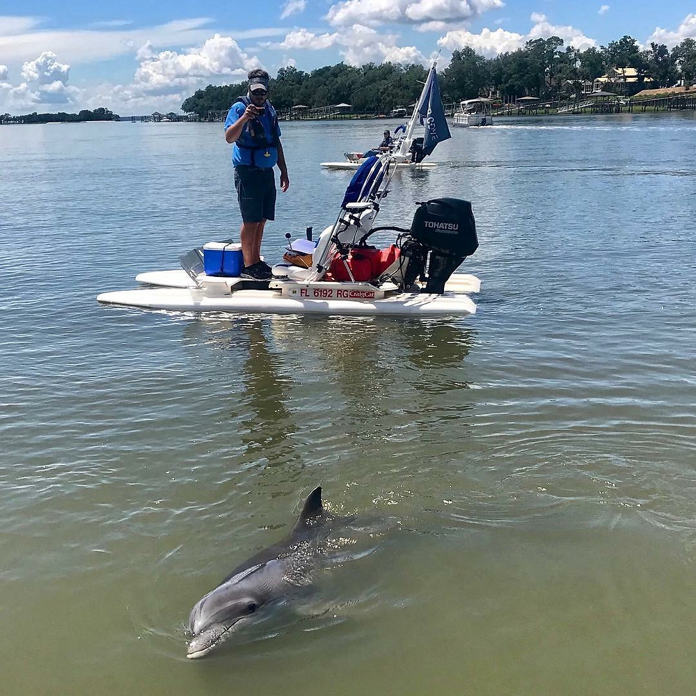 Closer Dolphin Sighting on a Hilton Head Dolphin Tour