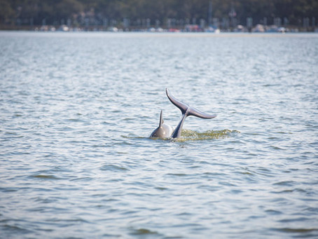 HILTON HEAD ISLAND WILDLIFE GUIDE