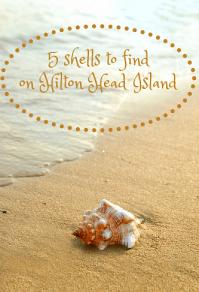 5 Shells to Find Beachcombing on Hilton Head Island