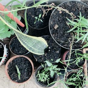 Pelajaran dari Mengompos dan Berkebun di Rumah