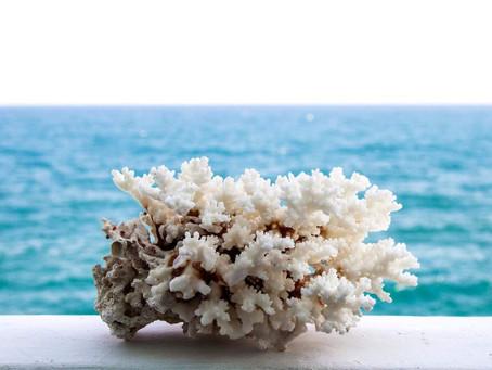 Konservasi Karang dan Laut Bersama Coral Triangle Center