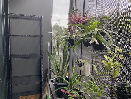 Membangun kebun pangan di lahan sempit