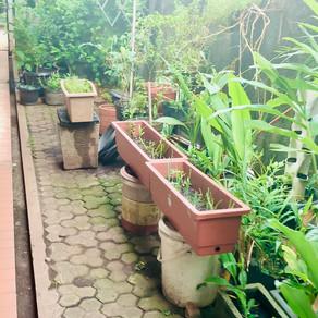 Progres Proyek Kebun Pangan di #MinisponsibleHouse