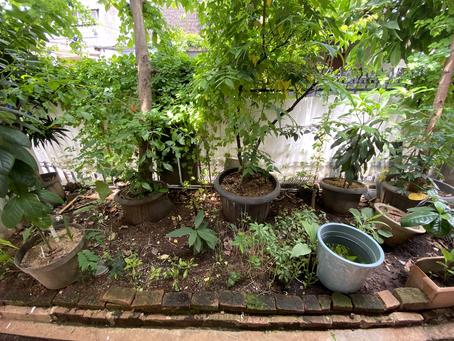 Design kebun pangan bareng Kebun Kumara