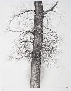 A metà della vecchia quercia, 2013.jpg
