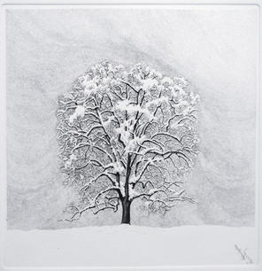 Magnolia con neve, 2012.jpg