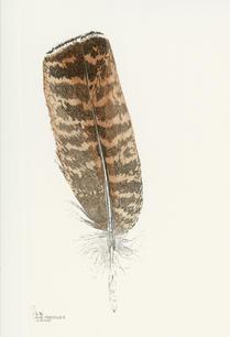 Penna di gallo forcello femmina, 1996.jp