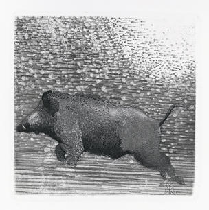 Cinghiale che corre, 2002.jpg