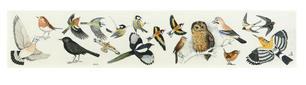 Uccellini acquerellati, 2006.jpg