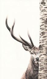 """""""Cervo nascosto"""" 50x30cm   35€"""