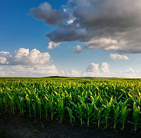 bigstock-The-agricultural-land-of-a-gre-