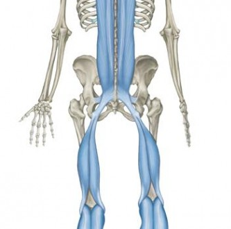 Hamstrings and Lower Back Pain
