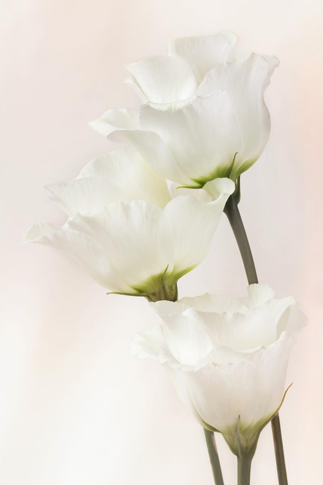 Softly,softly/ Rose without thorns