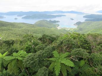 高知山と大島海峡