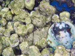 Осьминог и голубой моллюск