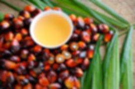 palm_oil.jpg