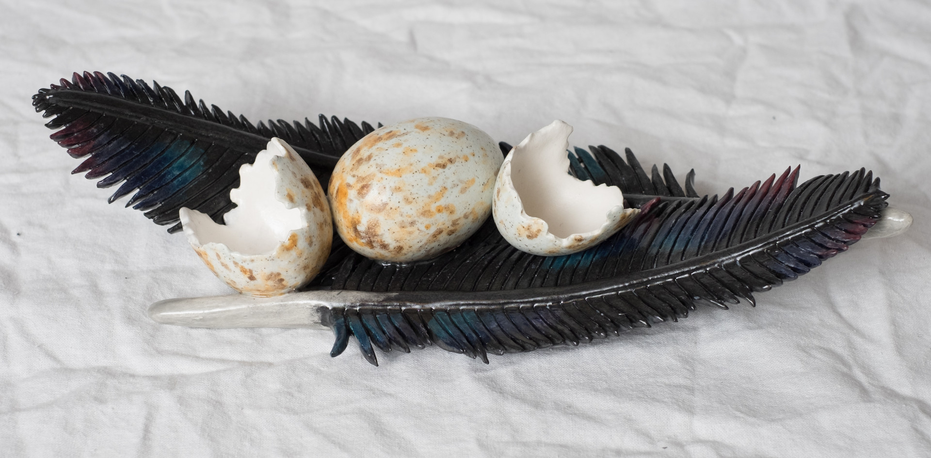 Crow feathers and eggs