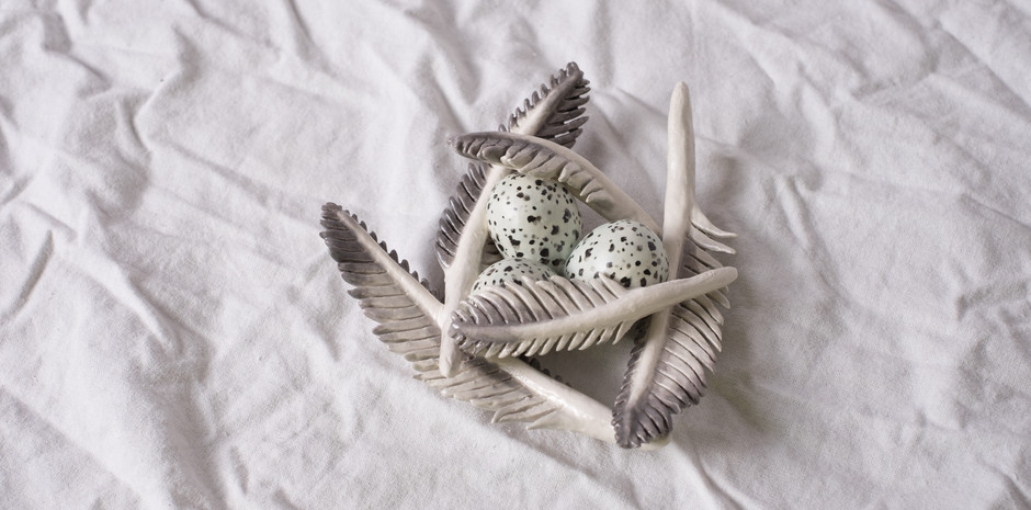 Piping plover feathers and eggs