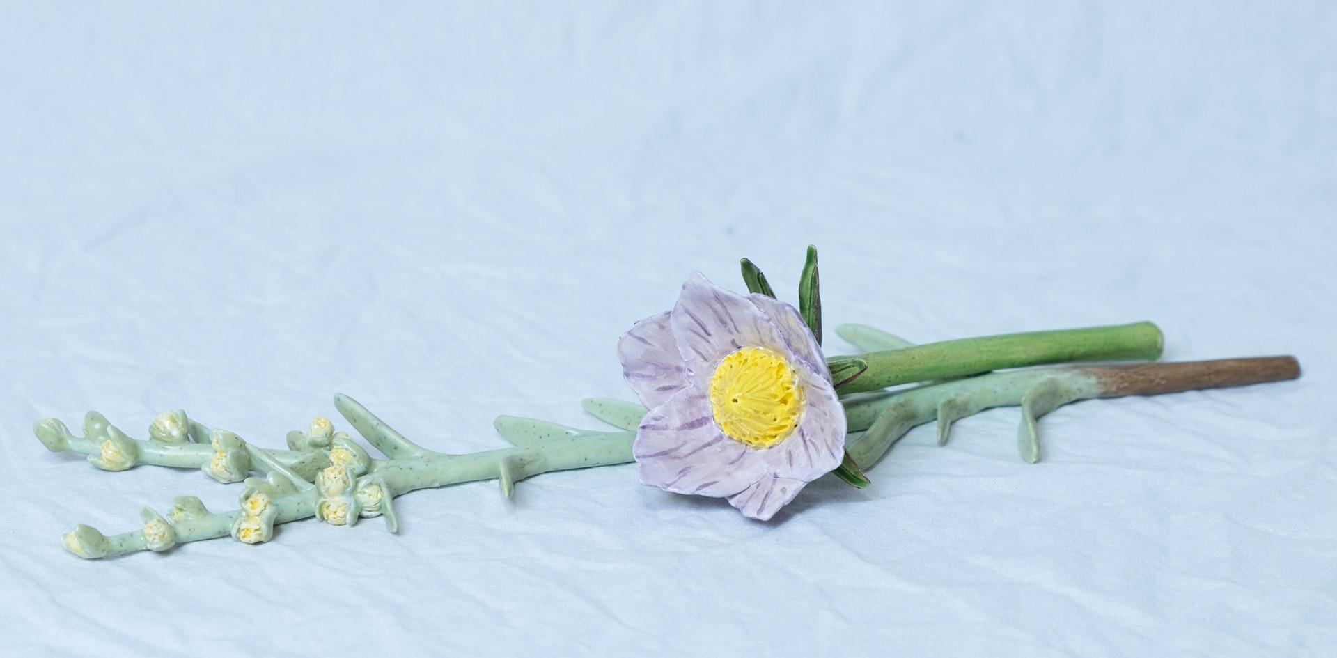 Sage and Pasqueflower