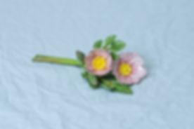 pairieplants-1.jpg