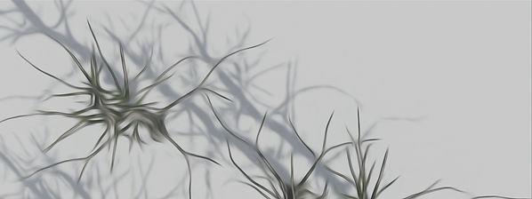 flora900.jpg