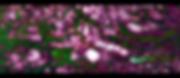 Screen Shot 2020-05-01 at 10.49.59.png