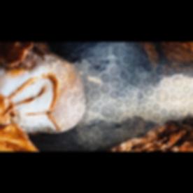 Screen Shot 2020-05-01 at 11.30.04.png