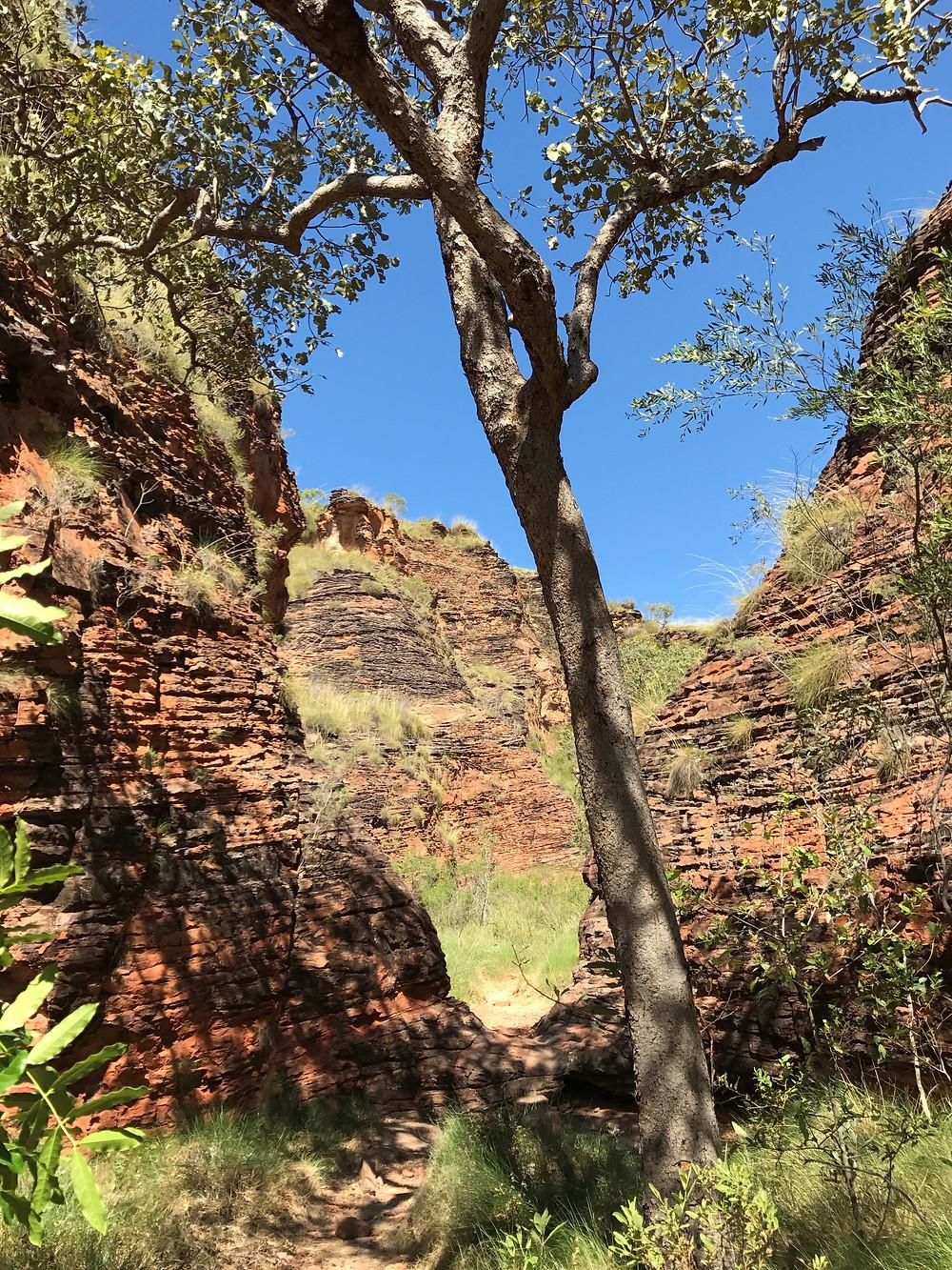 Mirima Demboong Banan Trail