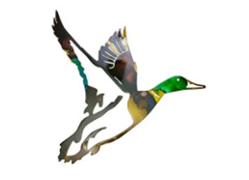 Maverick the Mallard Duck