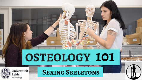 Osteology 101- Part 3/5: Sexing Skeletons