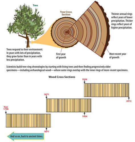Archaeological Dating Techniques: Dendrochronology
