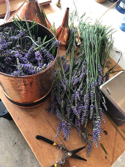 Lavender Hydrosol 2 oz.