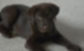 Puppy Hank