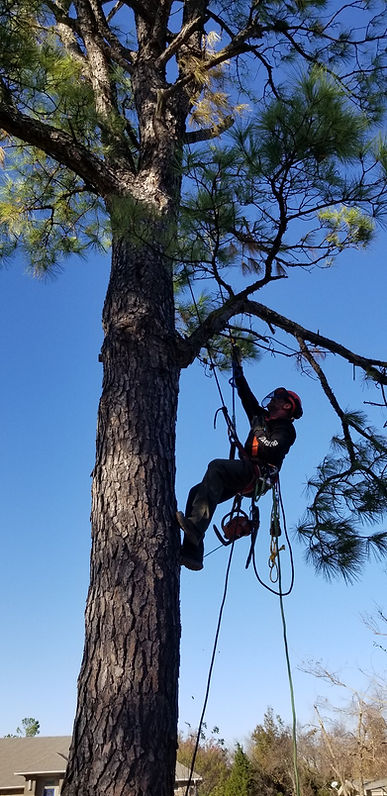 Tree Work in OK.jpg