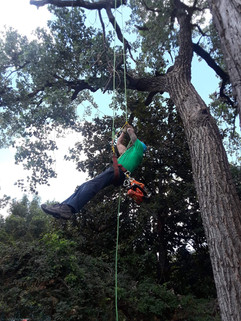 Tree Trimming in Highland Park